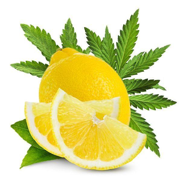 Dark Burner Aroma - Chill-Out - Lemon Haze 10ml